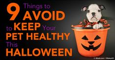 Most pet parents are aware of well-known Halloween dangers, but there are other potential hazards you may never have thought of. http://healthypets.mercola.com/sites/healthypets/archive/2015/10/31/halloween-pet-safety-tips.aspx