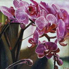Ferenc Tulok Orchids 2012