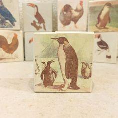 minilitos-piedra-solnhofen-con-pinguinos piedra litográfica 5x5x2cm