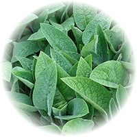 Allantoin - Derived from the Comfrey plant, allantoin is renowned as a soothing botanical that has healing and calming benefits.