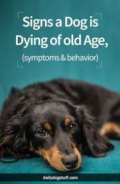 Signs a Dog is Dying of old Age, (symptoms & behavior) via @dailydogstuff