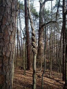 Este árbol se mareó un poco:   28 plantas que olvidaron por completo cómo ser plantas