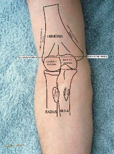 Human Skeleton Anatomy, Human Anatomy Drawing, Human Body Anatomy, Human Anatomy And Physiology, Medicine Notes, Medicine Student, Hand Therapy, Massage Therapy, Skeletal Muscle Anatomy