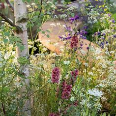 Perfect for warming spring days this cottage garden border features a birch tree under planted with Verbascum Petra Orlaya grandiflora white camassias and a scattering of cow parsley. From The Night Sky Garden designed by @therichbrothers Chelsea 2014. : @pauldebois