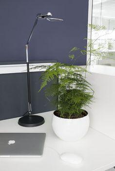 Planters, Plant, Window Boxes, Pot Holders, Flower Planters, Pots
