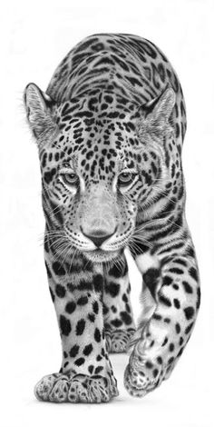 Leopard zu Fuß – Erkan Alayat – Join the world of pin Pencil Drawings Of Animals, Animal Sketches, Art Drawings, Drawing Drawing, Leopard Tattoos, Animal Tattoos, Big Cats Art, Cat Art, Big Cat Tattoo