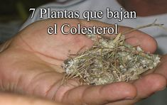 Recetas Caseras Fáciles MG: 7 Plantas que bajan el Colesterol How To Dry Basil, Food, Medicinal Plants, Homemade Recipe, Health Tips, Herbs, Natural Remedies, Essen, Yemek