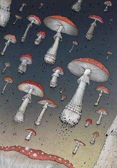 What do you prefer, mushies or truffles? Belka And Strelka, Mushroom Wallpaper, Acid Art, Psy Art, Mushroom Art, Hippie Life, Weird Pictures, Psychedelic Art, Wallpaper Backgrounds