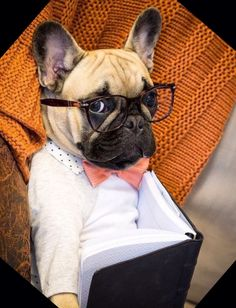 """I wanna go on a date, but I'm too shy"", nervous French Bulldog Hipster Geek ❤️"