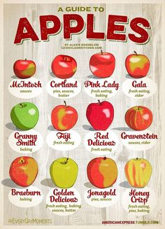 "babycakesbriauna: ""chiaralombardox: ""Finally! Look at this guide  uhm has someone ever tasted honey crisp apples? My favorite ones are the pink lady  "" I love apples "" Golden Delicious & Granny..."