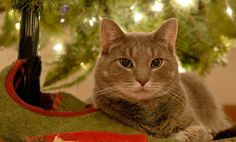 #OCPets - Our friends at VetStreet.com would like us to know... 7 Holiday Dangers for Pets -- and How to Avoid Them via @Care2