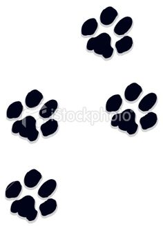 real cat paw - Google Search