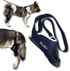 ORTHOPAEDIC BRACE FOR DOGS FOR KNEE RIGHT OR LEFT BALTO BT JUMP #BFTMEDICAL