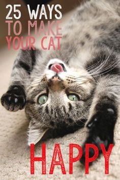 As cat parents, we're always looking for ways to enrich the lives of our kitty kids. Here are 25 quick and easy ways to make your cat happy! What would you add to the list?