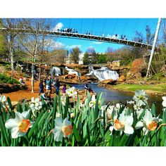 Spring is looking good on Greenville, SC. By @rwn1969 // yeahTHATgreenville