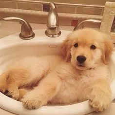 I am taking a bath. Now, stop looking! I am only a baby. Look at someone your own size
