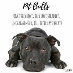Pit bulls...steadfast companions.