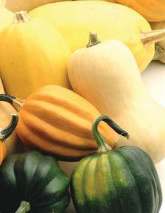 Preserving/curing squash & pumpkins