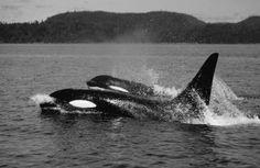 Blog de angelfive - Page 17 - Pour l'amour des orques - Skyrock.com