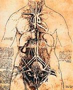 "New artwork for sale! - "" Leonardo Da Vinci - Drawing Of A Woman S Torso by Leonardo da Vinci "" - http://ift.tt/2kZ5T3Z"