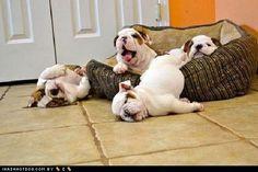 Hey, Ma.  I think we need a bigger bed.