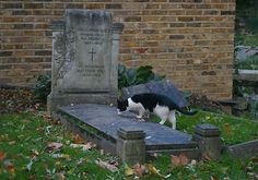 Take a Tour Through Highgate Cemetery in London Graveyard Girl, Cemetery Art, Feral Cats, Things To Do In London, Exotic Pets, The Guardian, I Love Cats, Cats And Kittens, Cute Animals