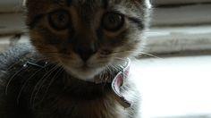 princess Princess, Cats, Animals, Gatos, Animales, Animaux, Animal, Cat, Animais