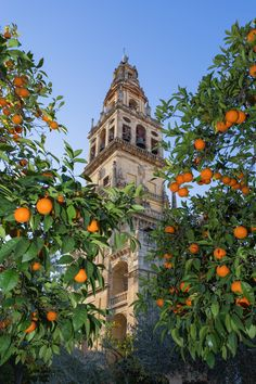 Among the Oranges, Cordoba, Andalusia, Spain ✯ ωнιмѕу ѕαη∂у Beautiful World, Beautiful Places, Perspective Pictures, Valencia, Cordoba Spain, Nature Hd, Islamic Architecture, Spain And Portugal, Places To See