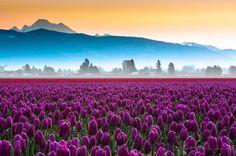 Top 10 spring destination