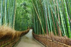 Sagano is located in the northwest of Kyoto and covers an area of 16 acres. Sagano Bamboo Grove has an excellent atmosphere and you can enjoy your walk along the trail to the Okochi Sanso. This bamboo forest is one of the most beautiful spots in Japan.