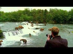 Brown bears feed at Brooks Falls in Katmai National Park and Preserve - Particle News
