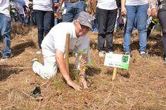 Realizan jornada de reforestación en Parque Eco-deportivo de Caballona | NOTICIAS AL TIEMPO