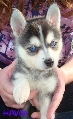 """So cute.... But his eyes kinda look like the eyes of the """"others"""" on Game of Thrones lol"""
