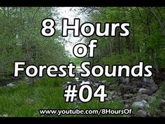 Nature sounds for cats, sounds for cats, dogs, nature sounds for dogs, relaxing forest bird sounds for 8 hours. Forest Sounds, Relaxing Gif, National Sleep Foundation, Family Fitness, Nature Sounds, Healthy Sleep, Family Night, What You Can Do, How To Do Yoga