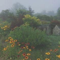 Sunday rain & fog in the garden. Michaela Harlow studio / thegardenerseden.com