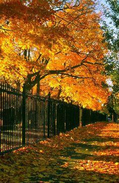 Autumn Fence, Richmond, Virginia
