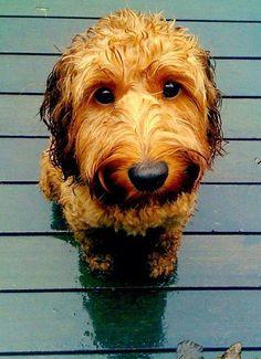 awww... <3: Sweet, Wet Dog, Puppy Dog Eyes, Awwwww Baby, Wet Puppy, Rainy Days, Furry Friends, Puppy Eyes