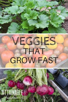 Impatient? Getting a late start? These vegetables produce quickly and make a great addition to your garden or homestead.