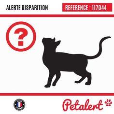 Cette Alerte est désormais close : elle n'est donc plus visible sur la plate-forme www.petalert.fr. Nous avons retrouvé notre animal Merci pour votre aide.