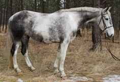 Dutch Warmblood Welcome to Equine Canada
