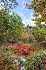 sumac bush in a karst glade in autumn