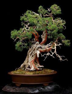 gartengestaltung bonsai baum garten pflanzen
