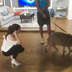 Natasha & Willow the capybara on Breakfast Television Toronto #natvanlis #natashanegovanlis #natasha #negovanlis