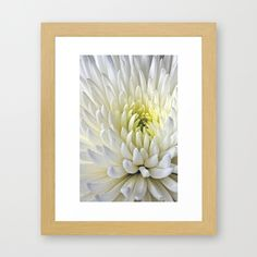 White Dahlia Flower Framed Art Print - $37.00 #Dahlia #flower #white #print #walldecor #homedecor #garden #floral