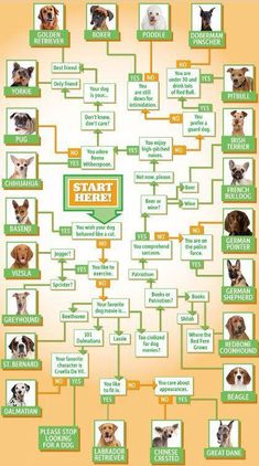 Fun Infographic on Which Breed of Dog is Right for You?-- both movies 101 Dalmatian & Lassie. My dog happened to be a crossbreed Dalmatian+Lassie. Doberman Puppies, Dogs And Puppies, Doggies, Dalmatian Dogs, Basenji Puppy, Yorkie Dogs, Dogs Pitbull, Bulldog Puppies, Pets