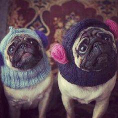 Love their cold Weather attire