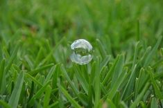 Augustine grass is a salt tolerant turf suited for subtropical, humid areas. This article provides information on growing and caring for this versatile grass in your lawn. Dallas Water, St Augustine Grass, Types Of Grass, Lawn Care Tips, Pergola Pictures, Lawn Sprinklers, Green Lawn, Outdoor Plants, Garden Plants