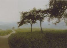 "wetreesinart: "" Gerhard Richter (All. 1932- ), Apfelbäume (Pommiers), 1987, huile sur toile, 72 cm x 102 cm """