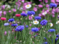 Kesäinen luonto elää ja kukoistaa Plants, Plant, Planets