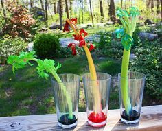 Celery experiment (science for k)